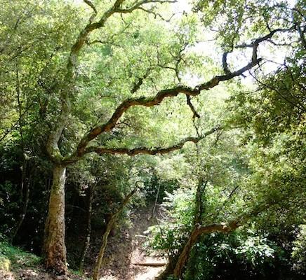 Chemin de Clavary